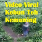 Video Viral Kebun Teh Kemuning